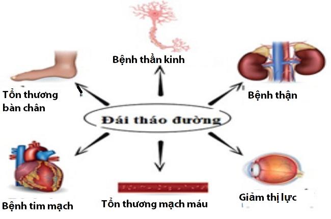 cay-thuoc-chua-benh-tieu-duong-4-300x225