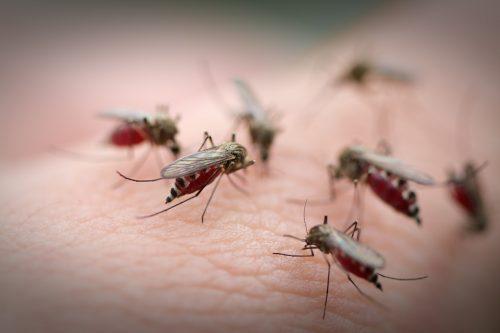 Phương pháp điều trị bệnh sốt xuất huyết đúng cách và hiệu quả