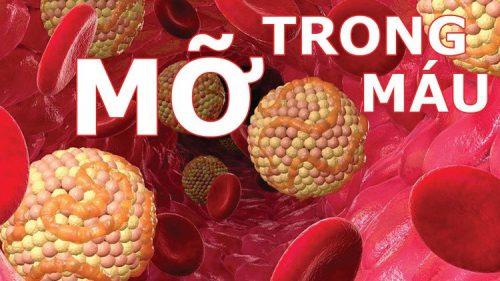 Tìm hiểu căn bệnh mỡ máu
