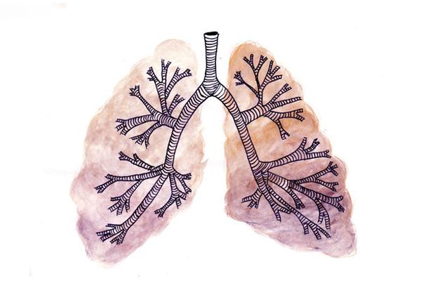 Chăm sóc lá phổi tăng cường đề kháng mùa dịch Covid