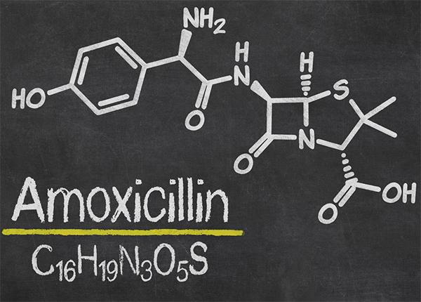 Amoxicillin nên phối với loại thuốc nào?